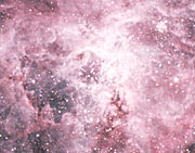 The Central Area of the Tarantula Nebula