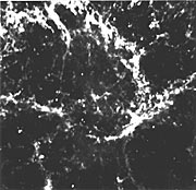 Pulsar in the Crab Nebula