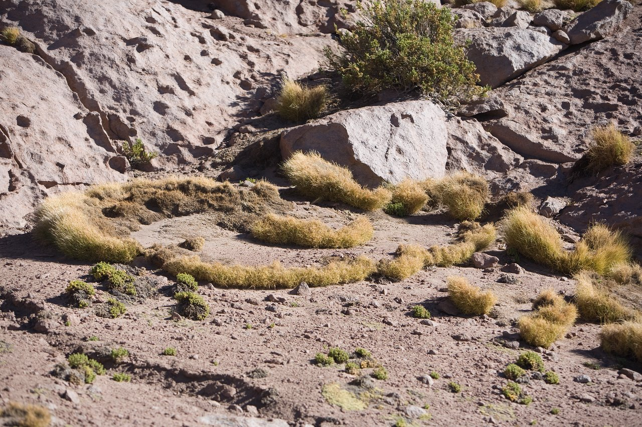 Flora at the ALMA site