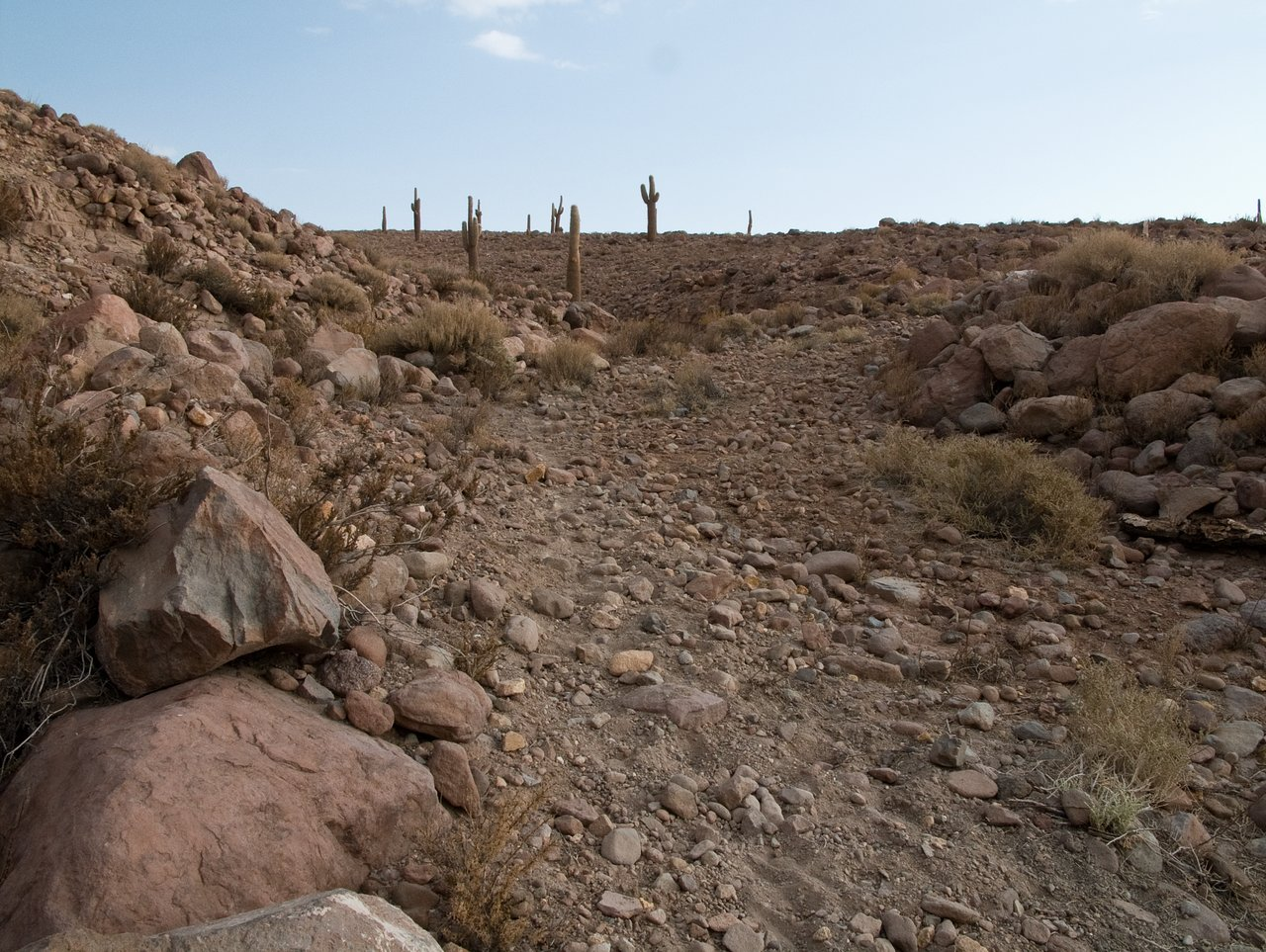 Giant cacti at the ALMA site