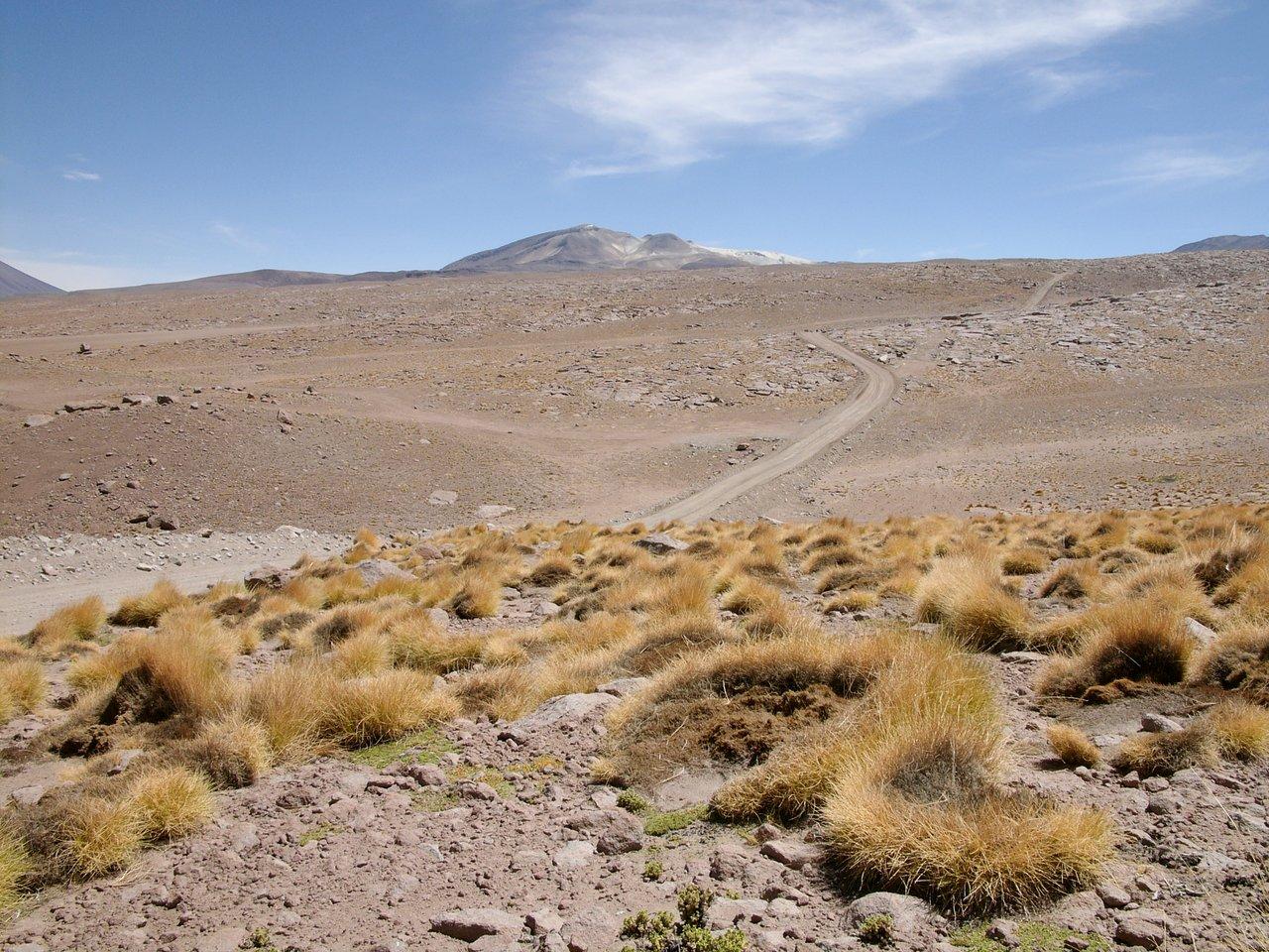 High Altitude Plants