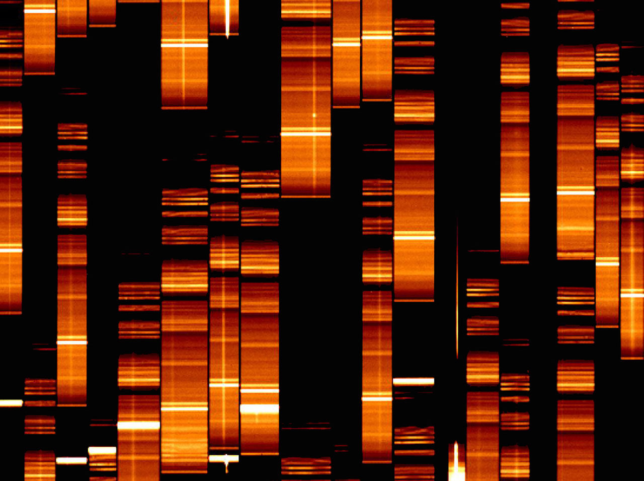 First VIMOS Spectra (In Detail)