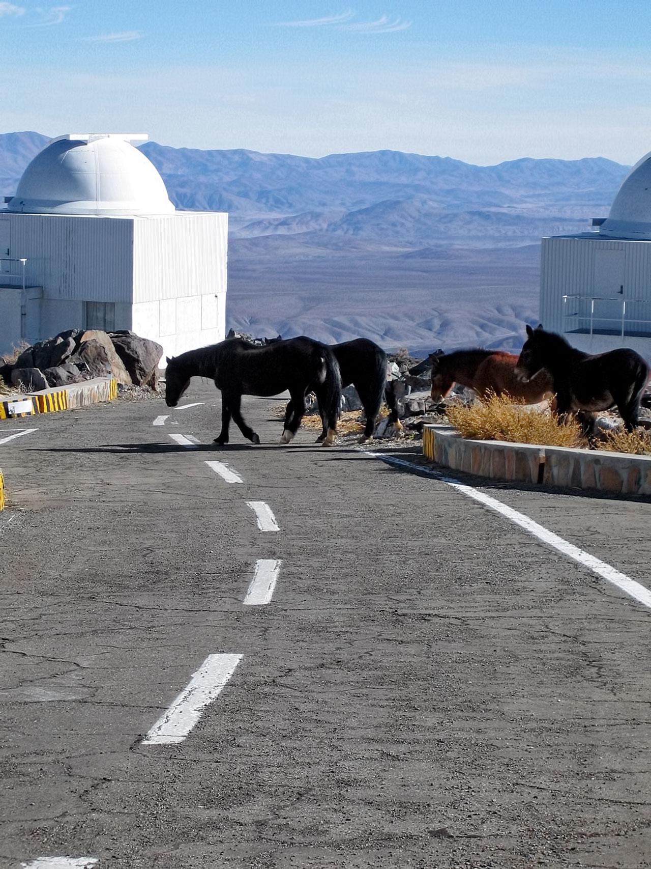 Visitatori equini