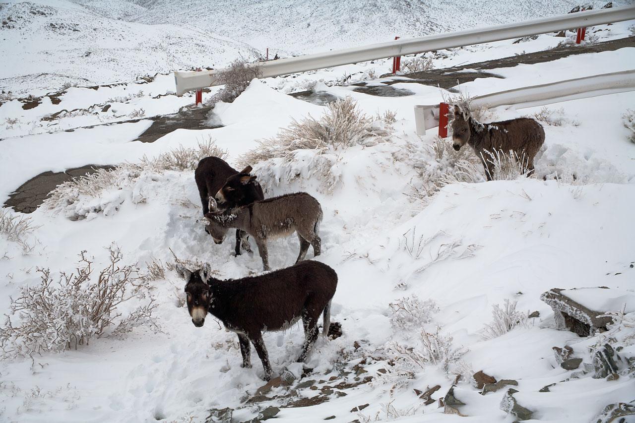 Donkeys at La Silla