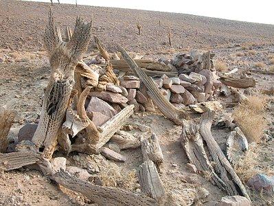 Archaeology in Atacama's Chilean desert