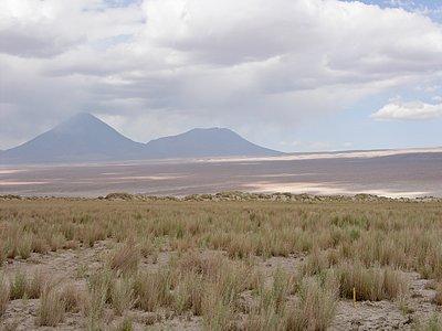 Atacama Flora