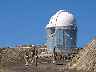 Furry Visitors at La Silla