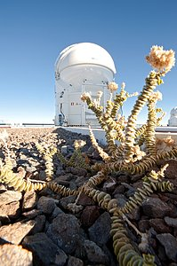 A Plant at the VLT AT