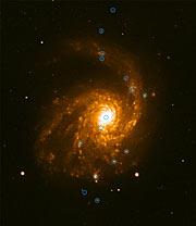 Spiral galaxy NGC 4254