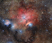 Stellar Nursery Blooms into View