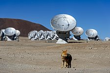 Fox at the ALMA Observatory