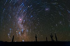 Star Trails over Atacama Desert Cacti