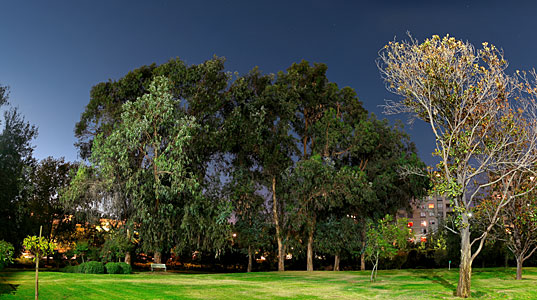 ESO Vitacura garden at night