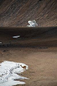 La vicuña y la antena
