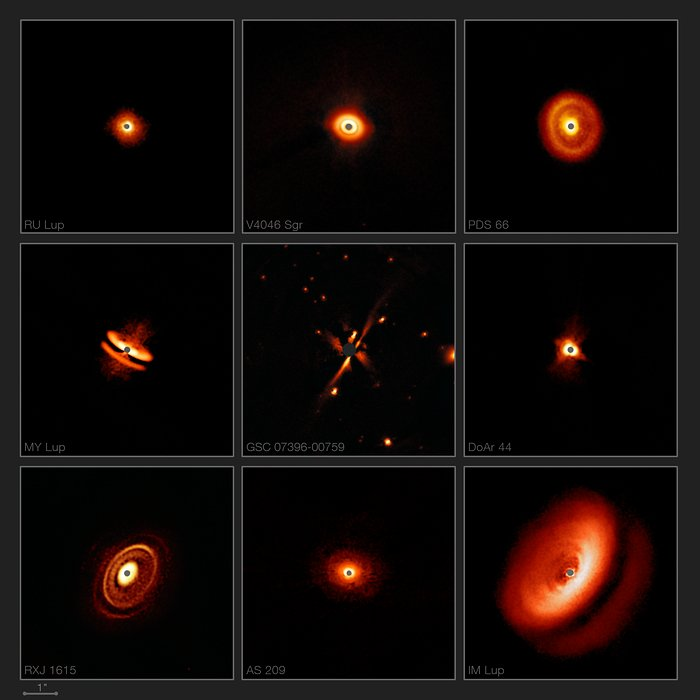 SPHERE images a zoo of dusty discs around young stars