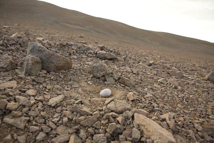 Seagull egg near Paranal