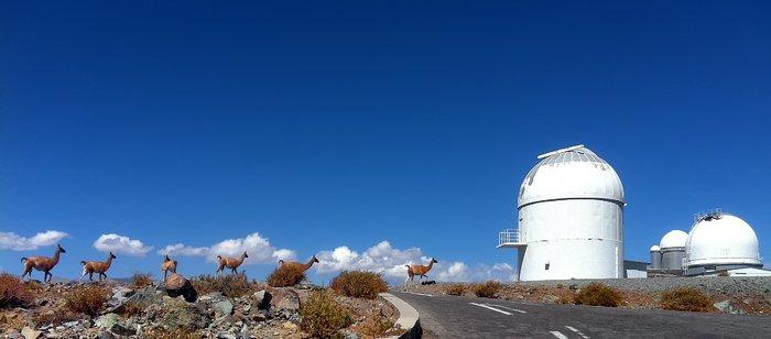 Vicuñas visitan La Silla
