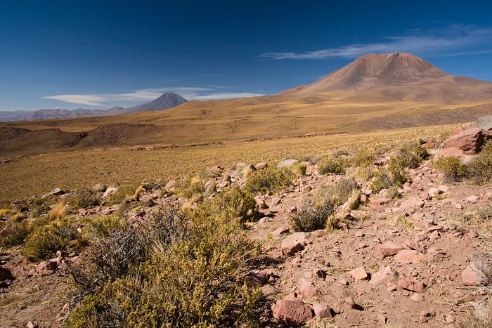 Vegetation on the ALMA site with Licancabur in the background