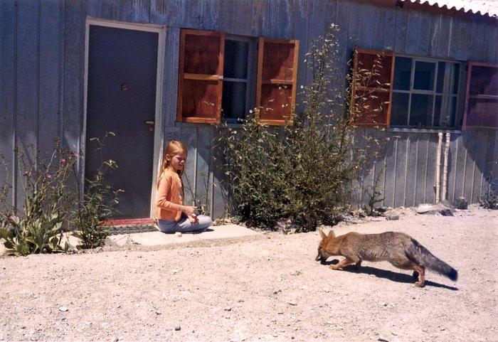 Fox at La Silla