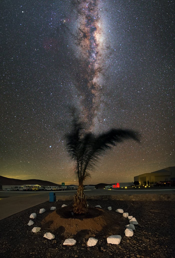 A palm tree in the desert