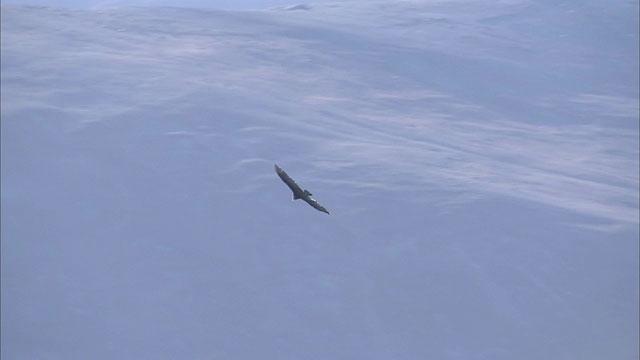 Condor at Paranal