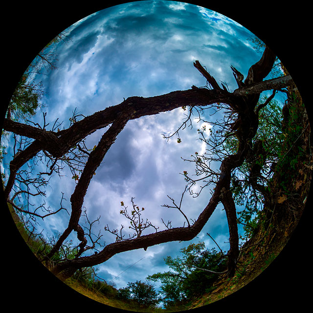 The sky seen from within a wood